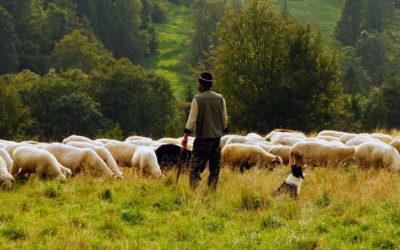 ¿Sabes sobre que trata la leyenda de los pastores de Estrella y qué relación tiene con el Camino de Santiago?
