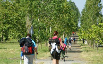 ¿Por qué elegir el Camino Francés para comenzar mi peregrinación?